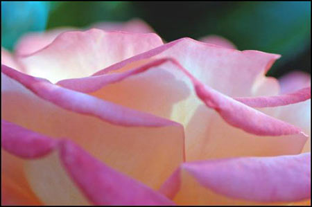 Flower 1 Collection - Pink Power