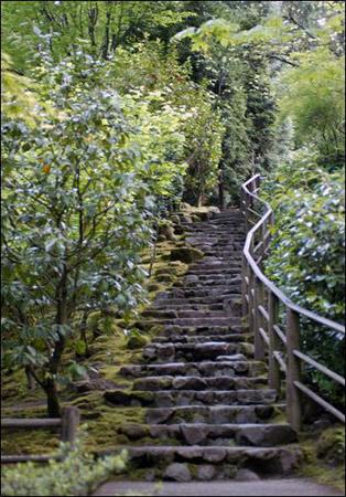Japanese Garden Collection - Follow Me