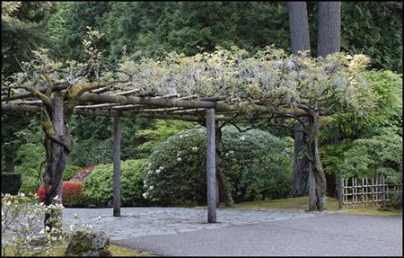 Japanese Garden Collection - Continue