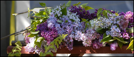 Lilac Collection - Bench-ful of Color