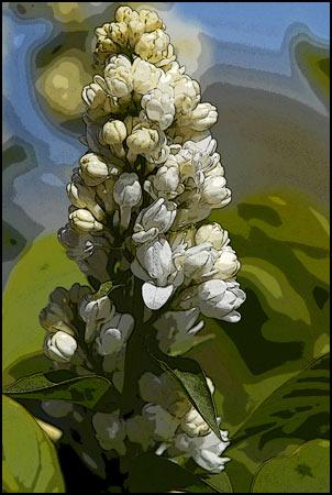 Lilac Art Collection - White Sensation