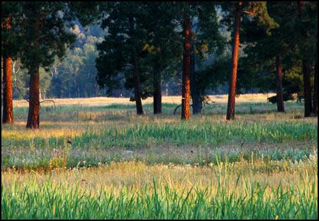 Meadow Morning Collection - Grass Arte