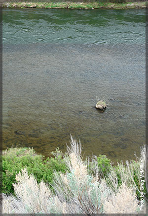 Nuisance periphyton on the lower Deschutes River