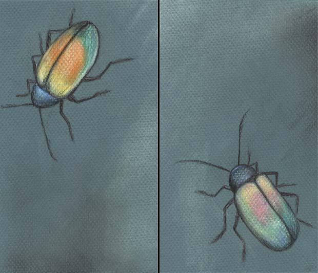 Iridescent Bugs