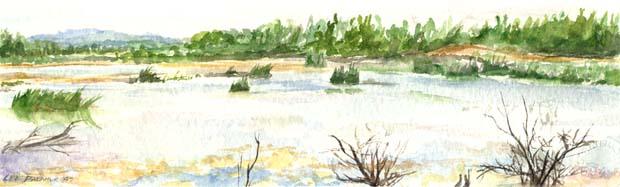 Marsh Panoramic
